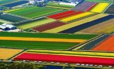 ФОТО: Завораживающие виды тюльпановых полей в Голландии