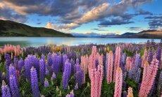 Почему Зеландия — Новая?