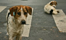 Vaata järgi! 5 imelist ja liigutavat lugu loomade päästmisest, mis toovad pisara silma