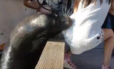 Ehmatav vaatepilt: süütuna näiv merilõvi tõmbas uudistama tulnud väikese tüdruku vee alla
