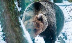 Karu Karoliina