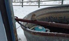 VIDEO: Südant soojendav. Mees päästis toru külge külmunud varblase vabadusse.
