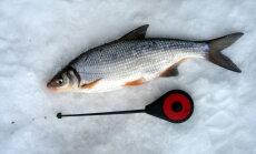 Vimmapüügist talvel: kust kala otsida?