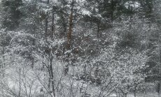 Lumine küünlakuu algus