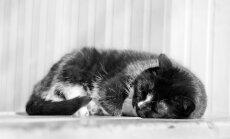 Mis toimub sinu kassiga une ajal?