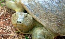 FOTOD: 15 omanäolist ja ohustatud kilpkonnaliiki, millest sul varem ilmselt aimugi ei olnud