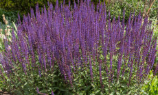 Idee Eesti lillekasvatajatele