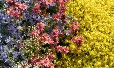 Istutamise tippaeg on käes: milline lill sobib sinu tähemärgile?