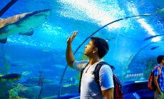 Murelik lugeja: Eestisse planeeritav ookeanikalade akvaarium – õhtusöök koos vangidega