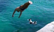 SAA TUTTAVAKS: Väike, kuid kartmatu koer, kes teeb kõrgetelt kaljurahnudelt vettehüppeid ja sukeldub koos oma omanikuga