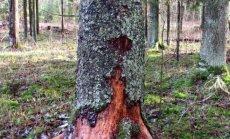 Leili metsalood: Mõned vanaisa aegadest pärit puud