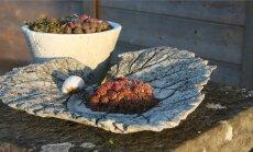 Betoonist valmistatud alus, mida saab kasutada nii väiksemate taimede kasvatamiseks kui ka puuviljavaagnana.