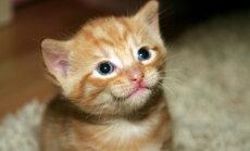Kilekottide närimisest käppadega sõtkumiseni: seletus neile ja veel kaheksale veidrale asjale, mida kassid teevad