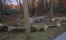 FOTOD: Torm murdis Tori pargis puu pikali