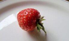 Leili metsalood: Sügise alguse puhul mõned punased maasikad