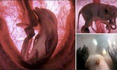 12 fantastilist FOTOT: Vaata, millised näevad loomad emaüsas välja