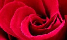 Õnnetu lugu elust enesest: mehed, pidage meeles, et valentinipäeval EI TOHI abieluettepanekut teha!
