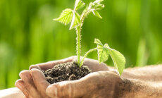 Permakultuur ehk jätkuloome - igaühe ökoloogiline võimalus?