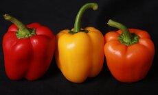 Kuidas teha nii, et paprika kasvaks priske