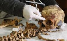 Nagu kreemitaks skeletti: teadlased tugevdasid lootevedeliku abil edukalt hõredaid luid