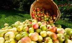 Lugeja küsib: miks pole kauplustes veel kodumaiseid õunu müügil?