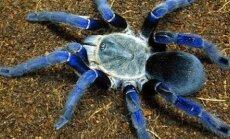 TOP 10 | Need on kõige mürgisemad ämblikud maailmas — sa ei taha oma reisil nendega kohtuda!