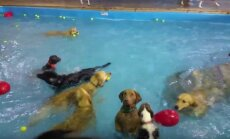 Lustakas VIDEO: Vot ei taha ja ei uju! Kutsu ei tea, mida koertebasseinis tegema peaks