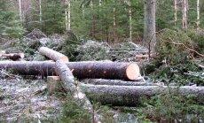 """<a href=""""http://blog.maaleht.ee/leilimetsalood/?p=8270"""" target=""""_blank"""">Leili metsalood: Metsast saab majale seinu ja lagesid</a>"""