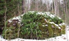 """<a href=""""http://blog.maaleht.ee/leilimetsalood/?p=8975"""" target=""""_blank"""">Leili metsalood: Igahaljas kivi-imar kaunistab Riinu kivi</a>"""