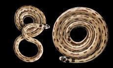 Найдены самые сильные змеи в мире