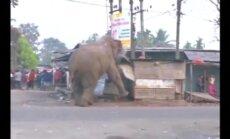 Indias lõhkus hullunud elevant umbkaudu 100 hoonet