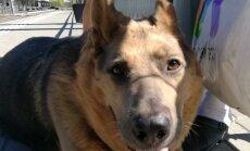 Süüdimatu omanik piinas oma vaevuliikuvat koera, lohistades teda avalikult mööda Tallinna tänavaid. Sündmustesse sekkus Katrin Lust