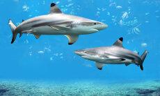 6 põhjust, miks haid ei kuulu vangistusse