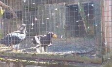 ФОТО и ВИДЕО Delfi: Как дела в весеннем зоопарке?