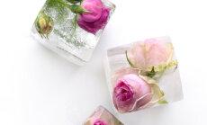 SUVEPIDUDE HITT: Jäised lilled