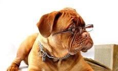 ÜRITUS: Tallinnas on tulemas rahvusvaheline loomaõiguste konverents