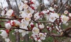 Tule loodusesse! Pakri poolsaarel võib eksida aprikoosisalusse