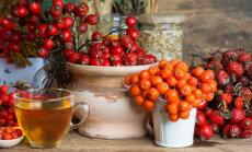Looduse apteek: 5 sügisest supertaime Eestimaa loodusest, mis tugevdavad sinu keha ja vaimu
