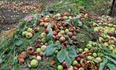HÜVA NÕU: Kuidas teha õunakomposti?