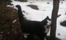 VIDEO: Kangelaslik kass päästis mägedes ära eksinud turisti
