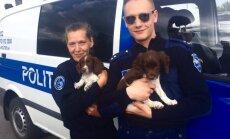 PILTUUDIS: Politsei- ja Piirivalveameti ridadega on liitunud kaks vahvat koerakutsikat