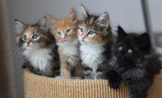 Nõuanded värskele kassiomanikule: kuidas kassipojale uut kodu tutvustada ning viia ta kokku pere teiste loomadega