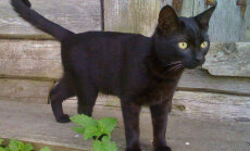 Nurr on terviseks! Täna on rahvusvaheline kasside päev!