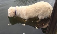 Teeb kogenuimadki kalamehed kadedaks: meisterlik koer püüab kala ühe ampsuga!