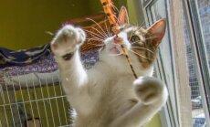 Soovid hüljatud kasse aidata? Selline näebki välja tüüpiline vabatahtliku