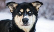 HÄMMASTAV: 8 asja, mida koer sinu kohta tajuda suudab