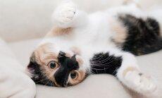 Kass norskab: kas see on normaalne või tuleks sellele tähelepanu pöörata?