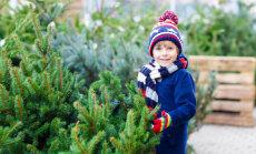 Mida teha, et jõulupuu kaua vastu peaks ja okkad ei pudeneks?