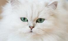 Kolm uut viisi nõudliku kassi hellitamiseks
