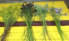 Eemaldage liigsed lehed ning varred – nii kuivavad taimed kiiremini.